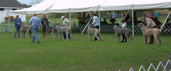 best puppy lineup