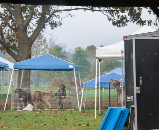 Saturday - LGRA, Puppy Fun Match