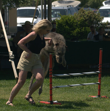 Friday - Veterans, Bitches, Agility Demo