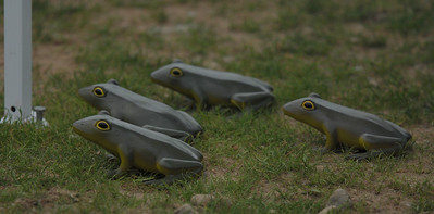 The Guard Frogs