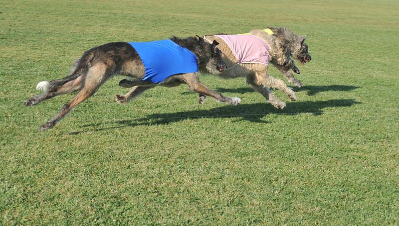 Marigold (yellow), Odie (pink), Mara (blue)