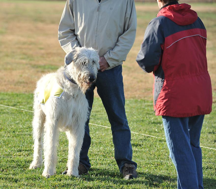 Wallace (yellow), Sloan (pink)