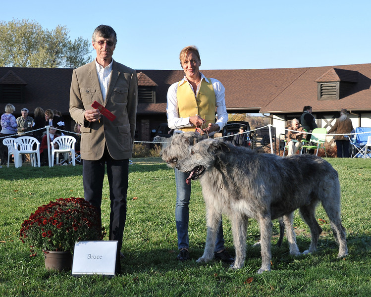2nd place: GCH Coleraine's McJagger, Erinwolf Mr. Brian Boru of Lansdowne