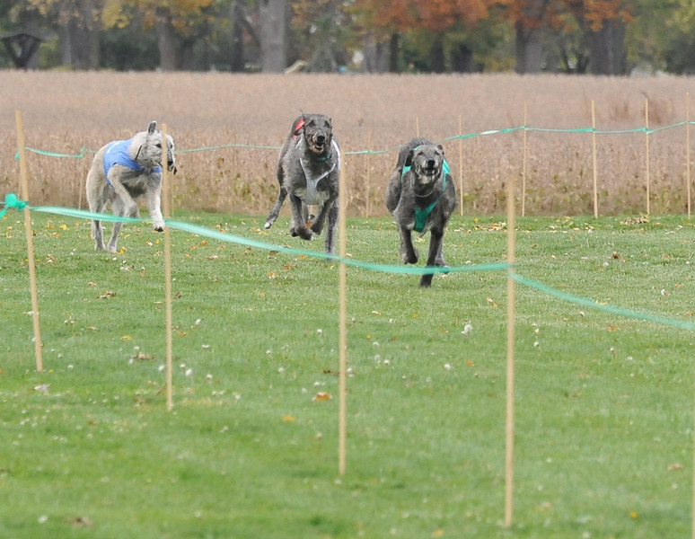 Emmy (1 - red), Powder (2 - blue), Aspen (3 - white), Torre  (4 - green)