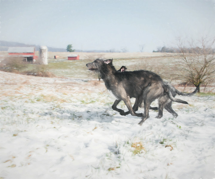 Snowy Day at the Farm