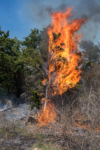 Red Cedar bursts into flames