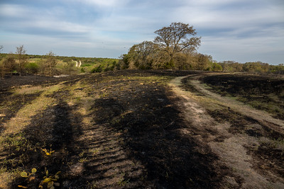 Burned fields will soon be covered with wildflowers and native prairie grasses.