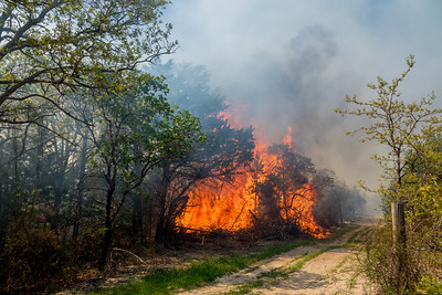 Large brush piles along East Fire Line were set on fire