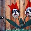 """Flower Dogs"""