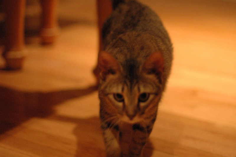 blurry cause she's moving but this is Miss Isabella... aka Izzy...