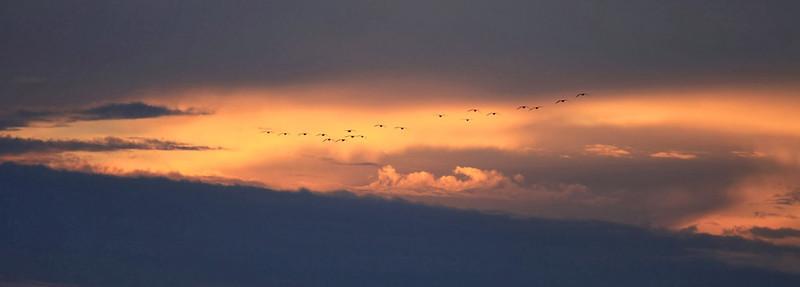 Isenberg Bird Preserve