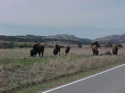 BuffaloRoad1