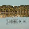 More reflection at Kent's Lagoon