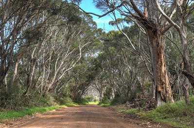 Back Road2