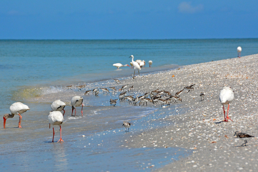 Island Travel - Sanibel Island, Florida