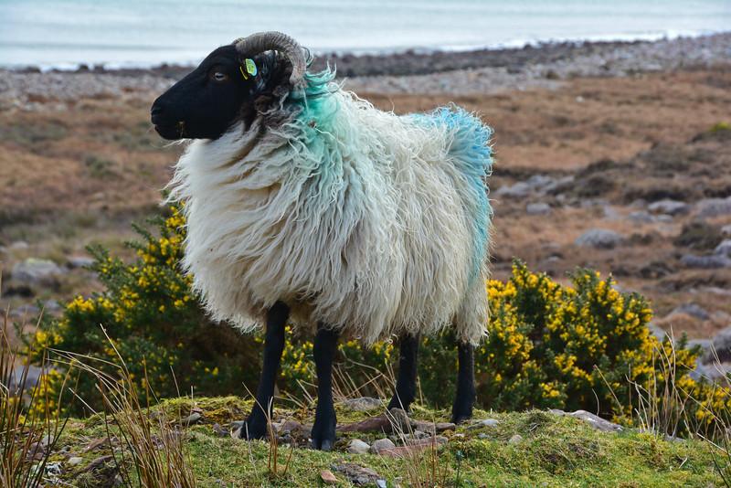 Achill Island - Ireland