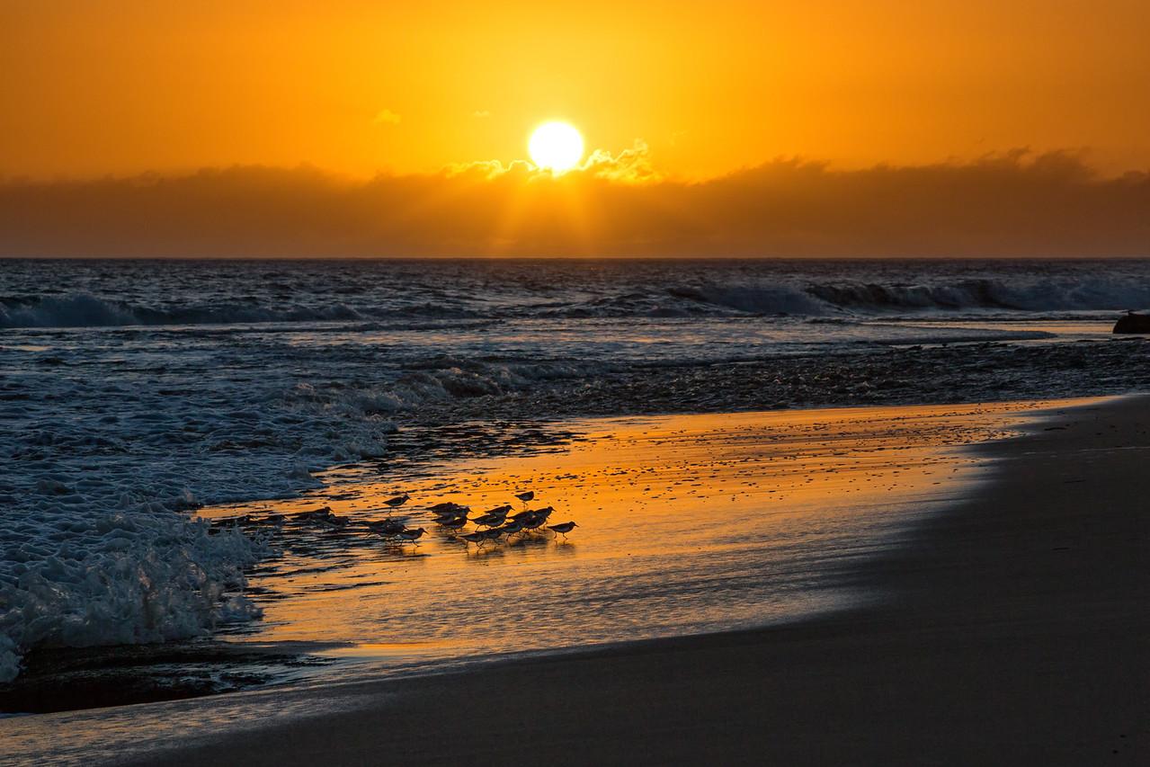 Waiokapua Bay Birds  ©2016  Janelle Orth