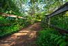 Kuilau Trail Bridge  ©2016  Janelle Orth