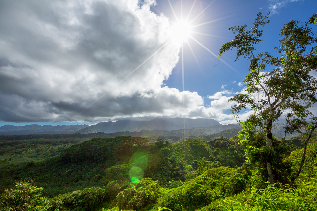 Kuilau Trail View  ©2016  Janelle Orth