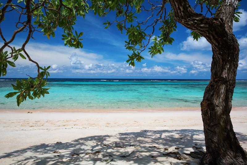 Ratidian Beach Tree  ©2015  Janelle Orth