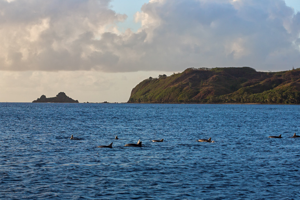 Dolphin Pod  ©2016  Janelle Orth