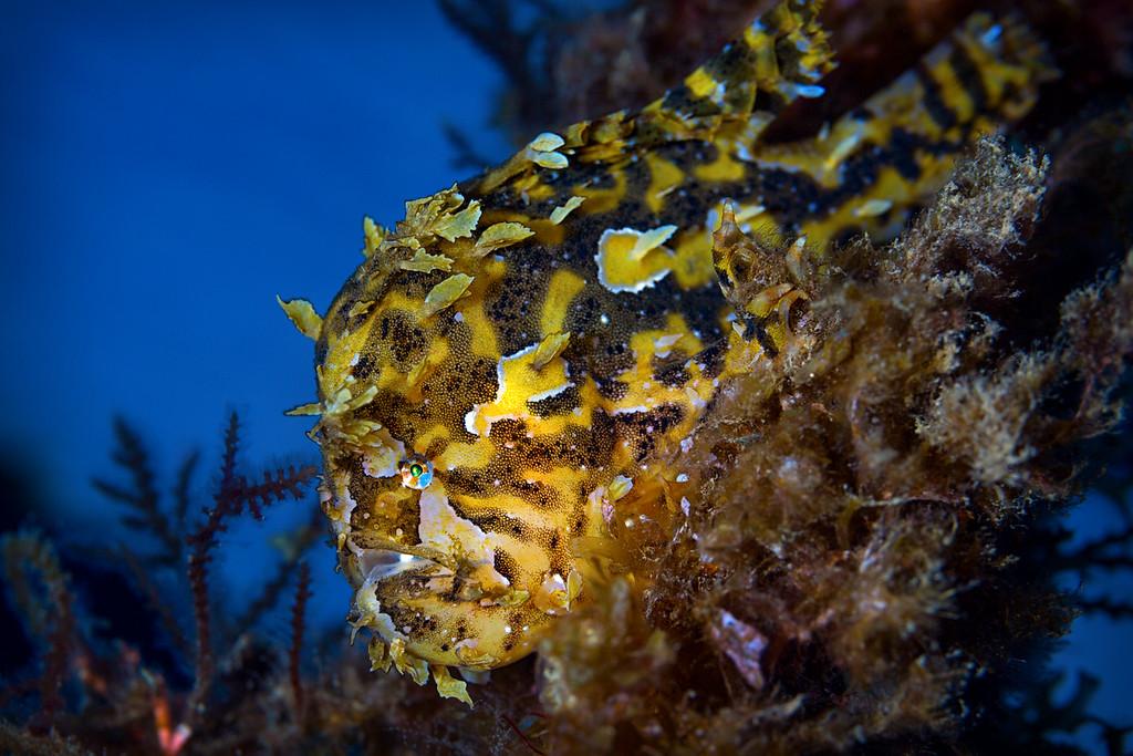 Frog Fish  ©2016  Janelle Orth