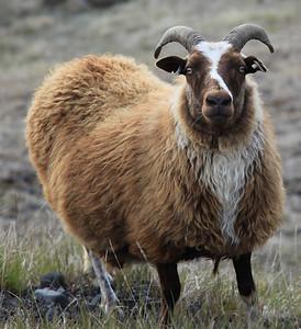 �owiecka