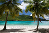 white sand beach with two palm trees in Virgin Islands