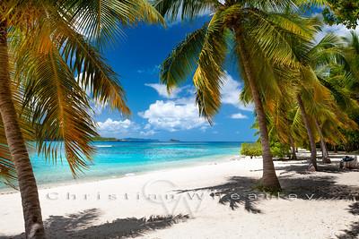 Mosquito Island palms