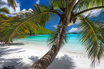 Maho Palm