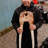 Yupik Man with Walrus Tusks