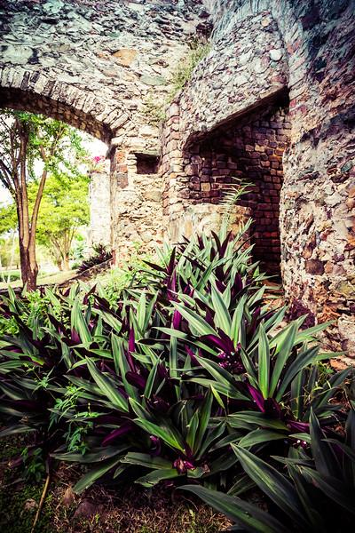 Tradescantia Among the Ruins