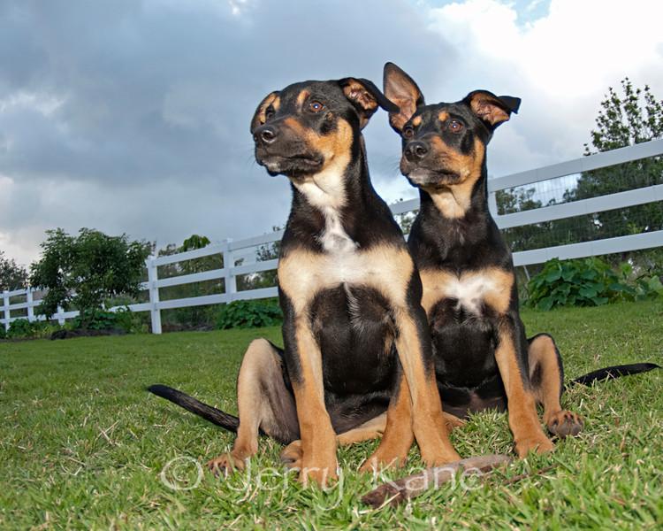 Wilson & Ruby at 4 months - Puuanahulu, Big Island, Hawaii