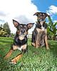 Ruby & Wilson