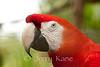 Macaw - Panaewa Rainforest Zoo, Big Island, Hawaii