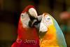 Macaws - Panaewa Rainforest Zoo, Big Island, Hawaii