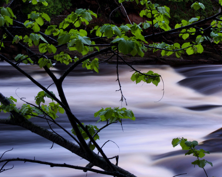 """Stream through the Trees"" by Kyle, 17 