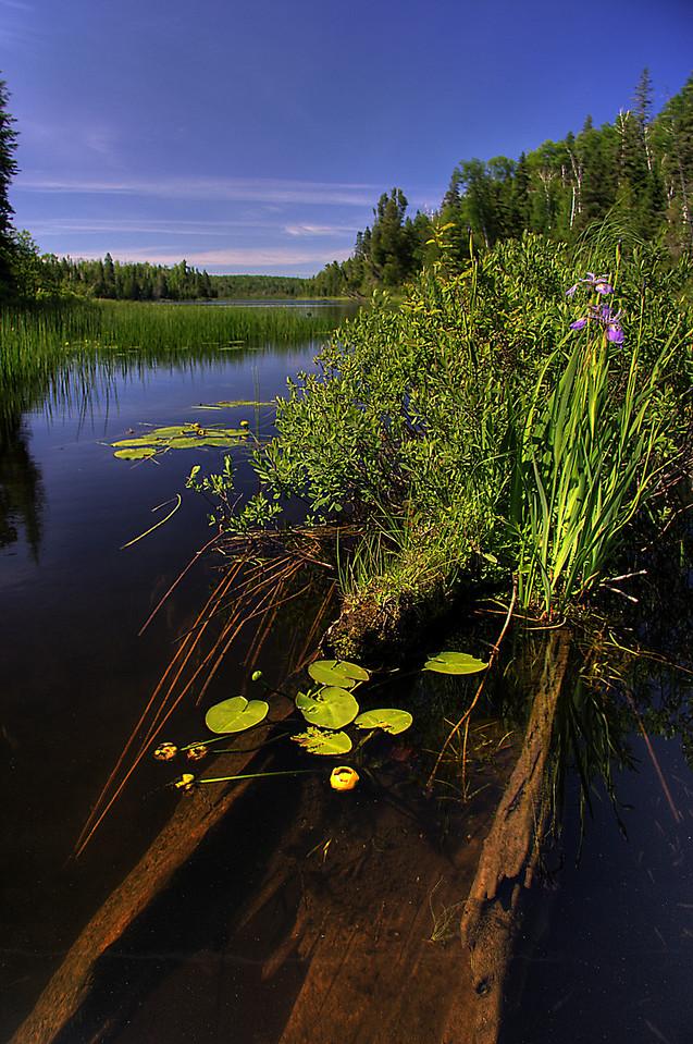 Chickenbone Lake Iris and Log