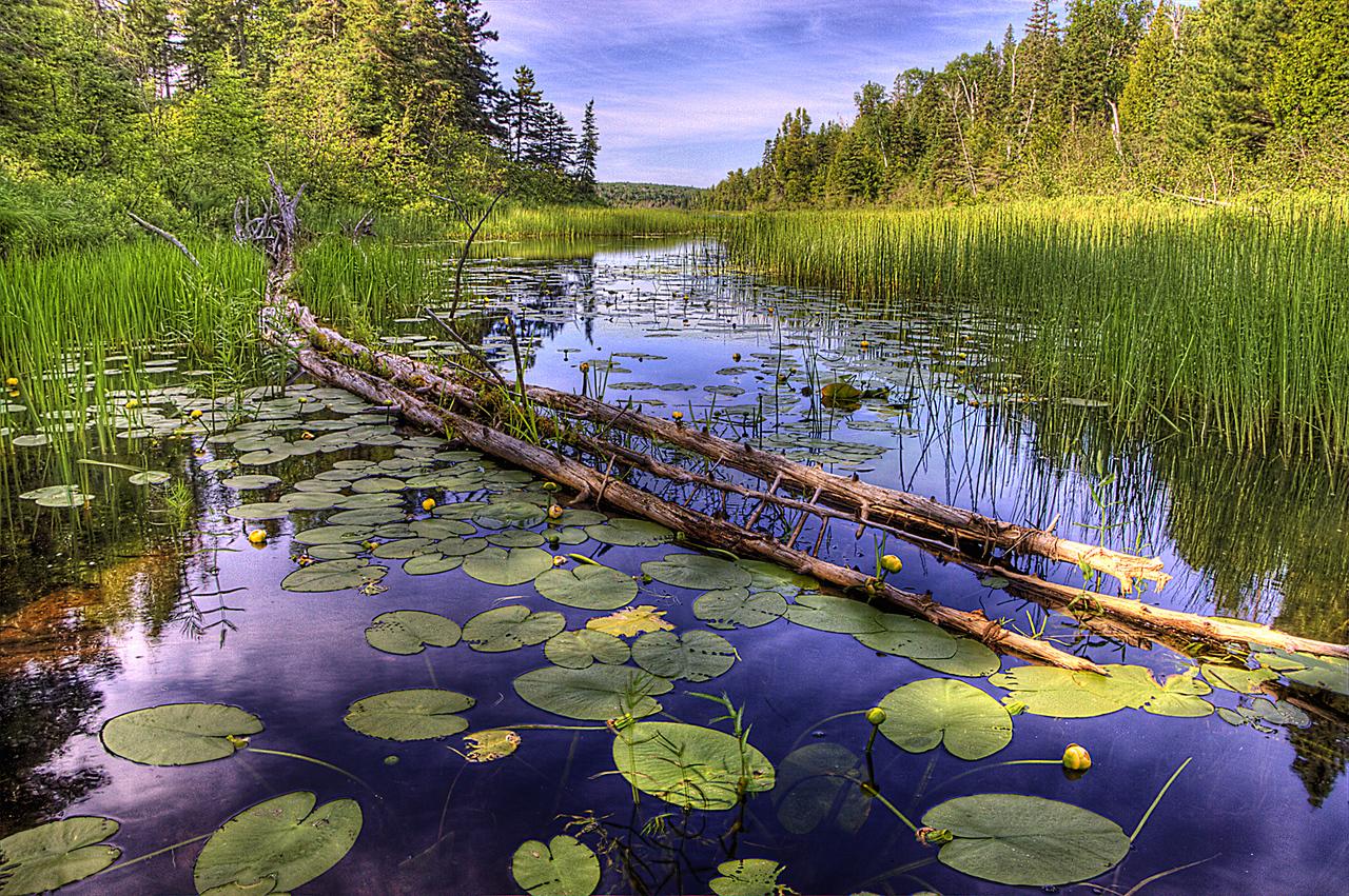 Amygdaloid Lake Lily Pads II