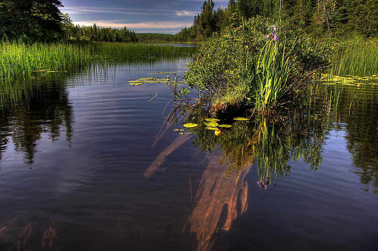 Chickenbone Lake Log and Iris