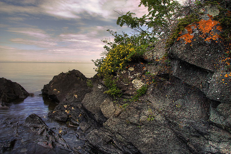 Lichens and flowers along the rocky Lake Superior shore of Isle Royale National Park
