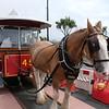 Horse tram , Derby Castle