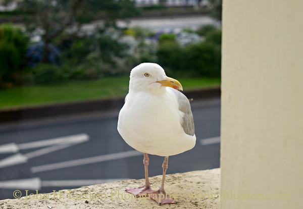 """Waiting for Breakfast"" - Sefton Hotel - Douglas, Isle of Man - July 29, 2017"