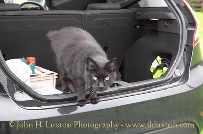 Mann Cat Sanctuary - Santon - Isle of Man - August 03, 2016