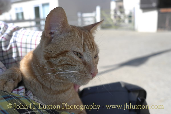 Mann Cat Sanctuary - Santon - Isle of Man - May 01, 2011