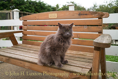 Mann Cat Sanctuary - Santon - Isle of Man - July 29, 2018