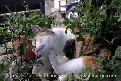 Mann Cat Sanctuary - Santon - Isle of Man - August 18, 2013