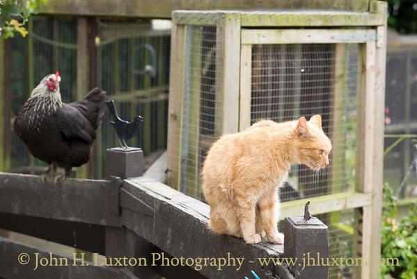 Mann Cat Sanctuary - Santon - Isle of Man - July 30, 2017