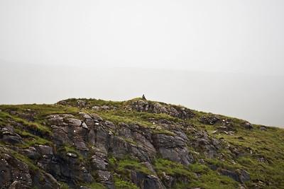 Juvenile White-Tailed eagle, Isle of Mull