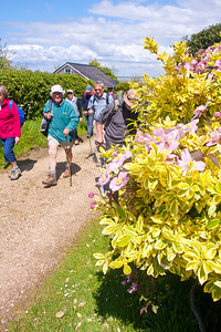 Isle of Wight Walking Festival 2013